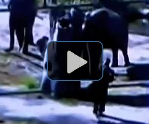 Video: Woman wanders into elephant enclosure